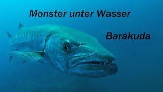 Barakuda, Monster unter Wasser, Tulamben, Wrack der Liberty in Bali
