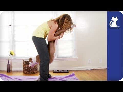 Advanced Full Body Stretch For Your Dog - Yoga With Your Dog