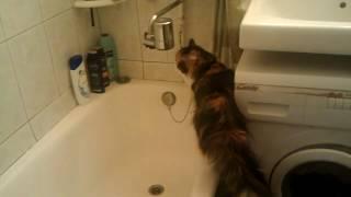 кошка пьет воду