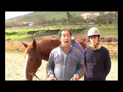 Il prezzo dove comprare lattivatore di cavallo
