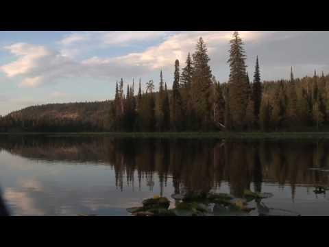 , title : 'Loon Lake / Loon Calls and Malamute Howls HD