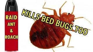 How I rid nasty Bed Bugs - Raid Ant & Roach Spray KO'ed the bedbugs I discovered myself