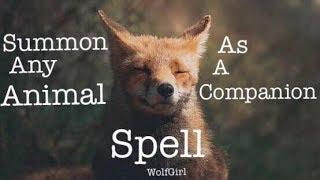 Summon Any Animal as a Companion Spell