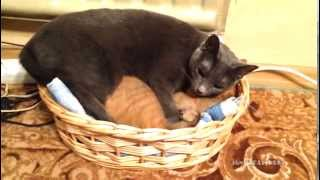 Turn off the light and get out human! / Выключи свет и выйди, человек! - Video Youtube