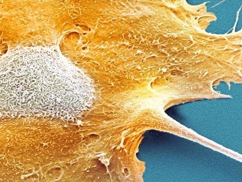 Proč nemáme všichni rakovinu?
