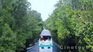 preview picture of video 'DJI Phantom 2: Tanjung Puting National Park'