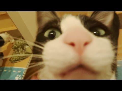 玄関開けるまで259,202秒でにゃんこ♪  Cat welcome - short.5 after 3 days-
