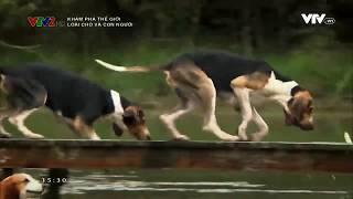 Loài chó và con người.