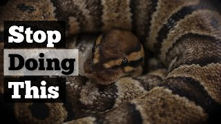 5 MISTAKES Ball Python Owners Make