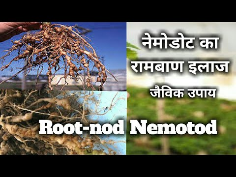 Structura verucilor plantare