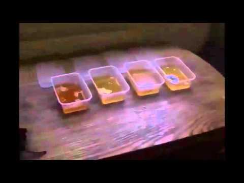 Colloidal Silver and the Jello Test