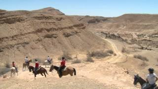 preview picture of video 'endurance horse riding alpaca farm mitzpe ramon israel'