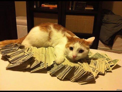Как пассивно зарабатывать деньги на вкладах