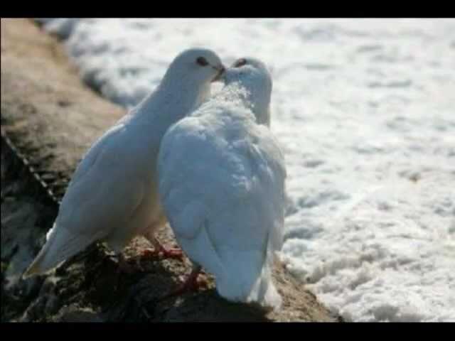 Aşk İki Kişiliktir-Bir Ataol Behramoğlu Şiiri