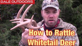 Rattling Whitetail deer