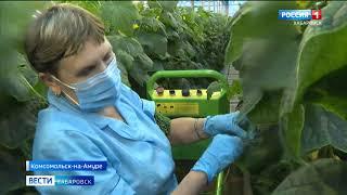 Свыше 2 тысяч тонн тепличных овощей собрали аграрии края в 2020 году