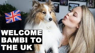 Welcoming Bambi to London   How To Fly Pet Internationally   Flying my dog to the UK   Puppy Haul