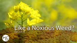 Like a Noxious Weed?
