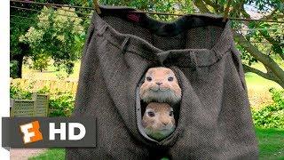 Peter Rabbit (2018) - No Guts, No Glory Scene (3/10) | Movieclips
