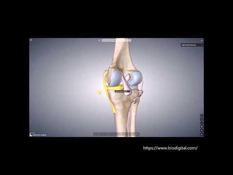 Prothese auf dem Schultergelenk