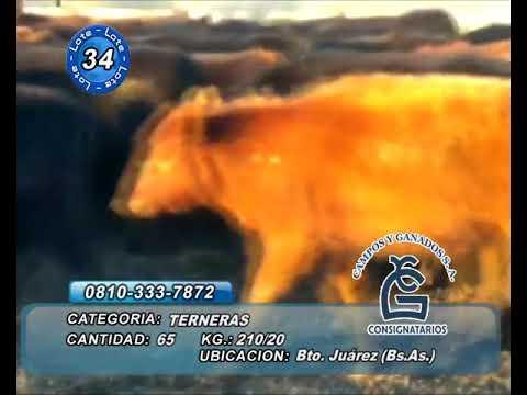 Lote Hembras - Bto Juárez