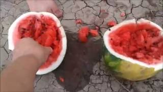 Где растут арбузы  Бахча
