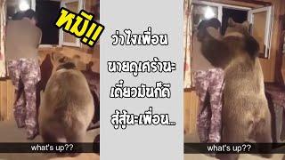 หนุ่มเศร้าเจอหมีเข้าบ้านมากอด สั้นๆแต่หลากหลายความหมาย... #รวมคลิปฮาพากย์ไทย