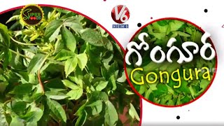 Amazing Health Benifits of Gongura | Sour Spinach | Super Foods | V6 News