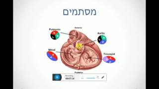 אנטומיה של הלב - שיעור 3