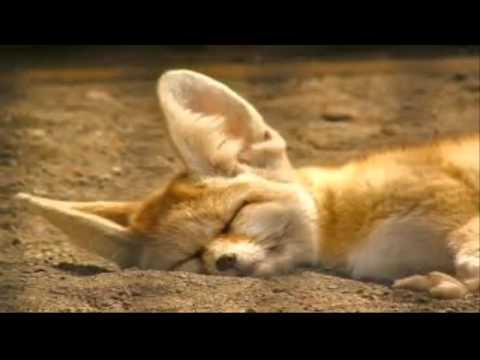 Animales extra os gal pagos referente de la selecci n natural animalesextintos11 - Videos animales salvajes apareandose ...