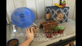 EVERYTHING You Need For A Pet Hedgehog!