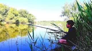 Как поймать карася летом на пруду
