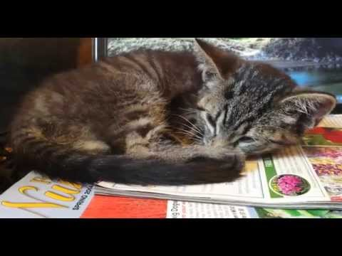 Video Baby Kitten is Sick | Our Family is Very Concerned