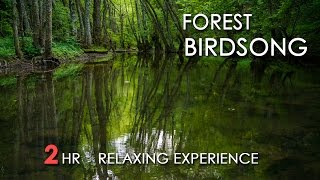 Эффект присутствия: звуки летнего утреннего леса - Видео онлайн