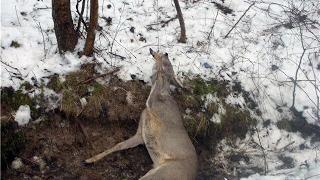Как сделать петлю для ловли лося