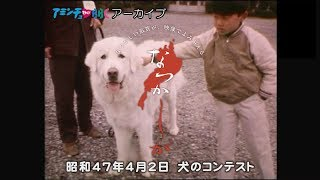 【なつかしが】 犬のコンテスト/昭和47年