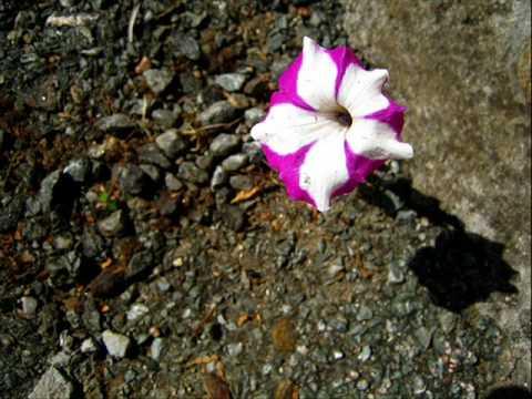 Na Tua Reza a Flor Que Resta - Rama Ruana