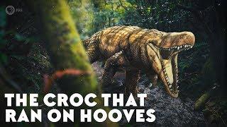 Удочка отвесного блеснения swd crocodile b2