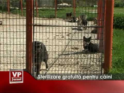 Sterilizare gratuita pentru caini