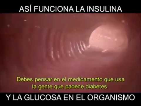 La insulina es inferior a lo normal en azúcares normales