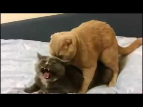How it feels to chew 5 gum (with cats)