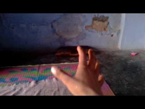 Bulu magic video