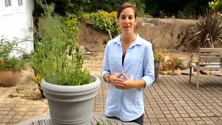How to Grow Herbs in Containers Gardening Video