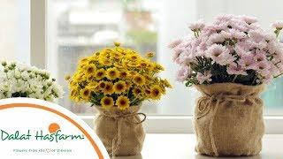 [Flowers TV] Hướng Dẫn Cắm Hoa Cúc Nhánh