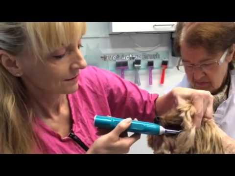 Wie wendet man die Emmi-Pet Hundezahnbürste an