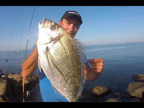 Pesca per 240x400