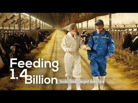 , title : 'Feeding 1.4 Billion: Inside China's largest dairy farm