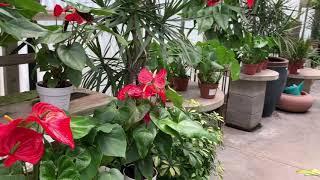 H&H Nursery Flowers Garden 2020