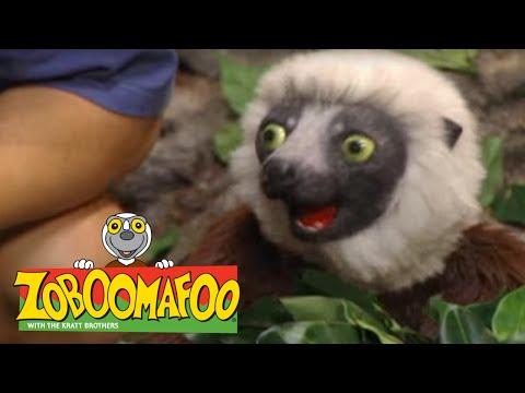 Zoboomafoo 225 - Brain Power (Full Episode) - игровое видео