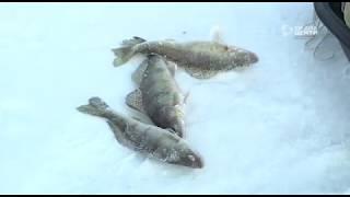 Зимняя рыбалка в череповце форум